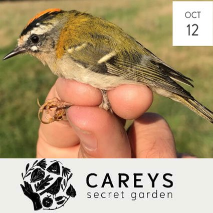 Carey Secret Garden Poole Harbour Birds and Birding Introduction Course 12 October 2021