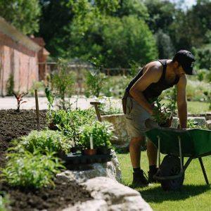 Find-more-about-carey_secret_garden-near-Wareham